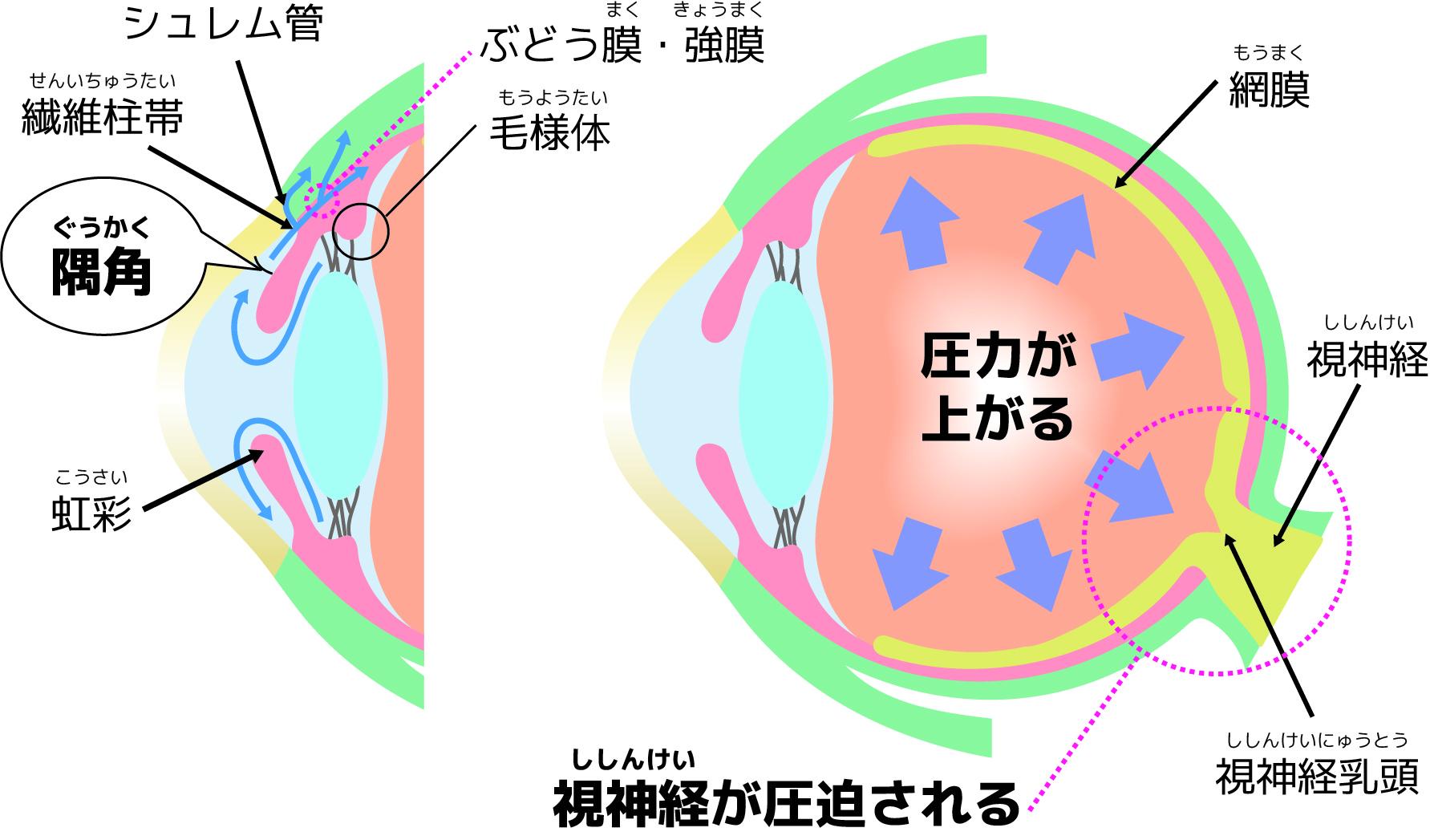 目の構造イメージ画像